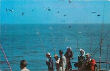 Beach Haven New Jersey~Fishing Party~Sea Gulls Hover Over Boat~1950s PC