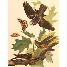Quality Vintage Reproduction Audubon Print Birds America Folio Whip-poor-Will
