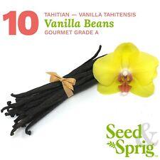 Tahitian Vanilla Beans | 10 Pack | Gourmet Grade A | Bulk Whole Pods | 5+ inches