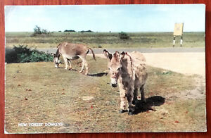 New Forrest Donkeys J Salmon Cameracolour Postcard Posted from Christchurch 1965