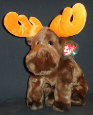 TY CHOCOLATE the MOOSE BEANIE BUDDY - MINT with MINT TAG