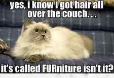 "Funny Cat  refrigerator magnet 3 1/2 x 4 1/2 """