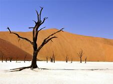 NATURE LANDSCAPE PHOTO TREE DESERT NAMIBIA CLAY PAN POSTER ART PRINT BB1474A
