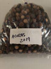 Acorns Premium Natural Organic Animal Wildlife Deer Squirrel Feed Food Bait