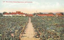 ASTI, CA Wine Cellars, Italian-Swiss Colony Winery Vintage Postcard c1910s