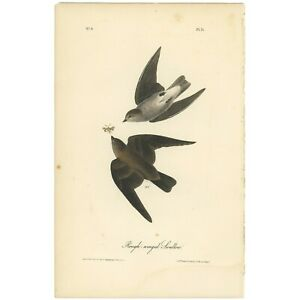 Audubon Octavo 1st Ed 1840 hand-colored lithograph Pl 51 Rough-winged Swallow