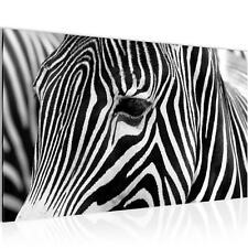 WANDBILDER Afrika Zebra VLIES LEINWAND BILD - XXL BILDER KUNSTDRUCK 001414P