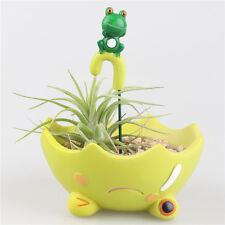 Kawaii Happy Frog Prince Umbrella Flower Pot Planter Succulents Cartoon Adorable