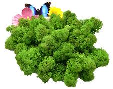 Muwse Islandmoos Köpfe 3-11cm 50g 1 Gras-grün handgereinigt Moos Büsche Bäume
