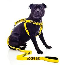 Adopt Me Strap Harness For Dogs - Free Shipping