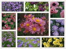 Long lived perennial border plant selection x 10 plants mixed colourful display