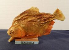 Real 8 Inch Mounted Venezuela Taxidermy Piranah Fish