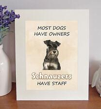 Miniature Schnauzer 8 x 10 SCHNAUZERS HAVE STAFF Picture 10x8 Dog Print Fun Gift