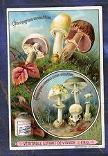 Chromo Liebig S631 Champignon Fungi Psalliote Amanite Amanita mushroom Agaricus