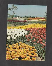 c1970s View of Spring Flowers, Martin Clifton Ltd, Appledore, Ashford, Kent