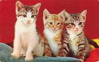 Postcard The Three Little Kittens