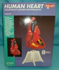Human Heart Anatomically Accurate Model Kit Skilcraft #71338 Unassembled in Box
