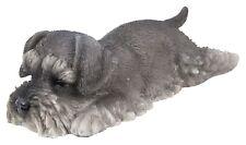 Vivid Arts-Pet Pals sommeil chiot & Schnauzer Boîte-Miniature Schnauzer