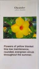 Yellow Oleander Plant Flowers Easy to Grow Home Landscaping Plants Shrub Garden