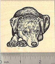 Miniature Pinscher Rubber Stamp, Min Pin Dog in Resting Pose K50507 WM