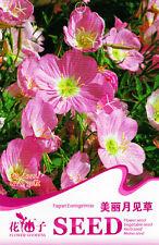 1 Pack 30 Fragrant Evening Primrose Seeds Oenothera Biennis Garden Flowers A222