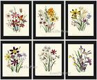 Unframed Botanical Wall Art Print Set 6 Antique Wildflowers Flowers Vintage Home