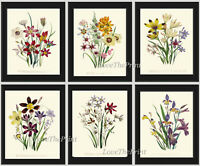 Unframed Botanical Wall Art Print Set 6 Antique Wildflowers Flowers Vintage Home