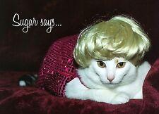 Sugar Says Fat Cat Inspirational Birthday Greeting Card Marilyn Monroe