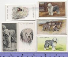 Old English Sheepdog Dog 6 Different Vintage Ad Trade Cards #3 Canine Pet