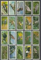 1976 Carreras British Birds Tobacco Cards Complete Set of 50