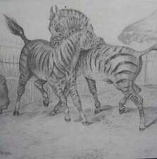 Attenhofer Hans Schweizer Künstler ZEBRAS Zebra KAMPF Afrika ZOO