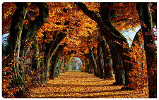 Quadro moderno viale alberato foglie secche autunno giallo arancio parco 100x60