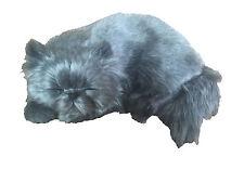 Gatto Persiano - Il cucciolo che respira - Breathing Puppies - PERFECT PETZZZ