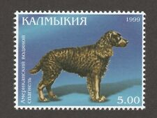 American Water Spaniel *Int'l Dog Postage Stamp Art Collection*Great Gift Idea