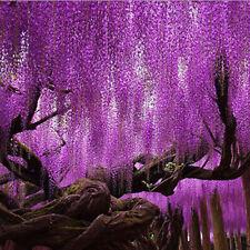 10pcs Purple Wisteria Flower Seeds Wisteria Tree Sinensis For Home Garden Plants