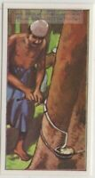 Natural India Tapping Rubber CaoutchoucTree Vintage Trade Ad Card