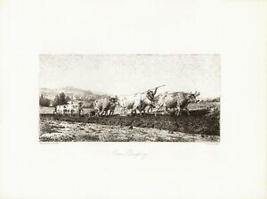 Aratura dei buoi, di  Bonheur,  incisione su rame  di Moran del  1876