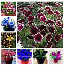 100 Pcs Seeds Hanging Petunia Bonsai Garden Flowers Mixed Color Perennial Plants