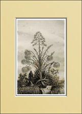 1835:SIRACUSA,PAPIRO.BAMBAJA,Aloè.PAPYRUS.Inc/Acc.AUDOT