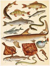 PAINTING BOOK SCHERREN POPULAR NATURAL HISTORY FISHES ART PRINT POSTER LF332
