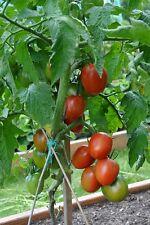 30 DE BARAO TOMATO Seeds