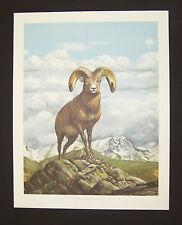 "Ray Harm Hand Signed Print ""BigHorn Sheep"" w/Original Envelope"