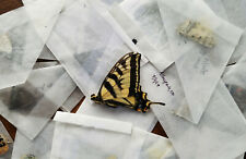 Mixed Lot of 25 REAL Butterflies TROPICAL! SHIPS FROM USA! Colorful! Art