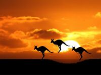Kangaroo Sunset - Australia Wild Landscape Wall Art Poster / Canvas Pictures
