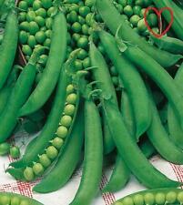 40 graines-économie Légumes-pois-carouby de maussane