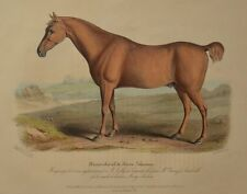 Lithographie XIXème Couleur et Gommée - Cheval de Chasse - Hermann Eichens