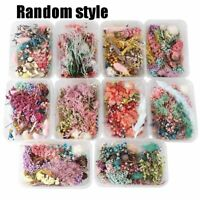 1Box Real Dried Flower Plants Herbarium For Aromatherapy Candle Necklace Jewelry