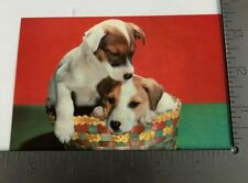 Vintage Postcard Fox Terrier Puppies Full Breed Dogs in a Basket