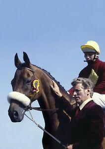 RED RUM 11 3 TIME GRAND NATIONAL WINNER (HORSE RACING) KEYRINGS-MUGS-PHOTOGRAPHS