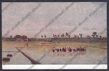 MONDINE 88 MONDARISO RISO RISAIA LAVORI AGRICOLI Pitt STEFFANI Cartolina v. 1920